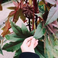 pianta con foglie rosse e verdi