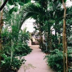 interno della serra dell'orto botanico di padova con la foresta pluviale