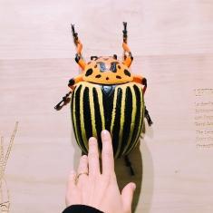una mano che tocca modellino di insetto gigante