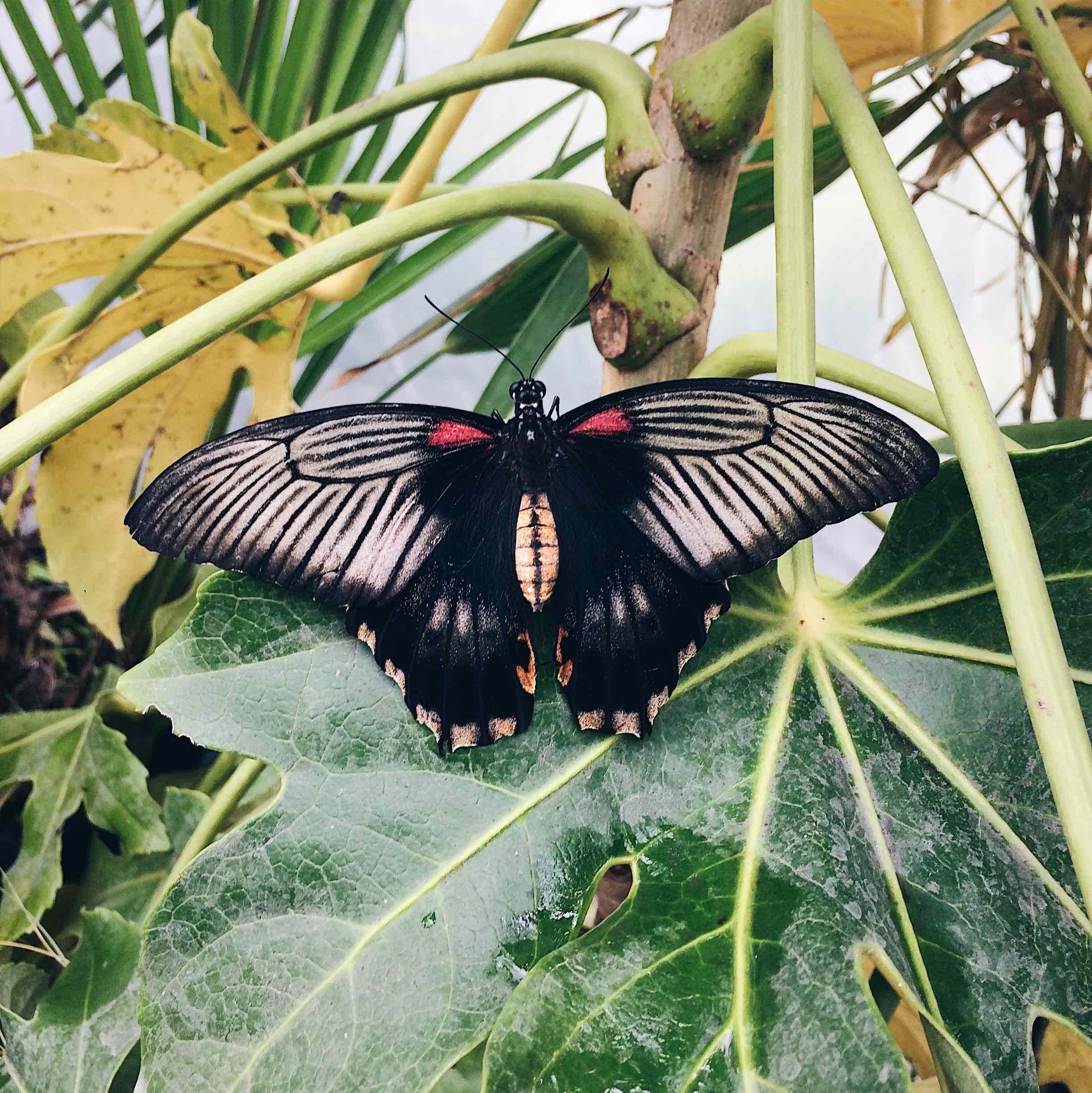 farfalla appoggiata su una foglia