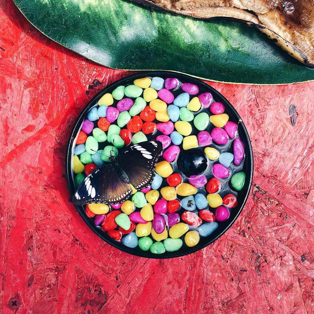 farfalla che mangia da un recipiente con sassi colorati