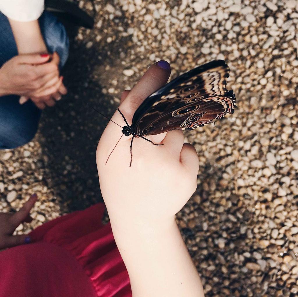 dentro la casa delle farfalle una farfalla posata sulla mano di una bambina