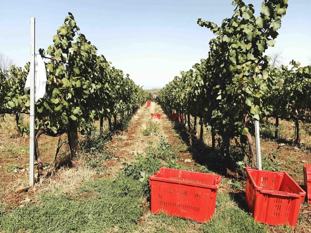 Merumalia Wine Resort il tour nelle vigne