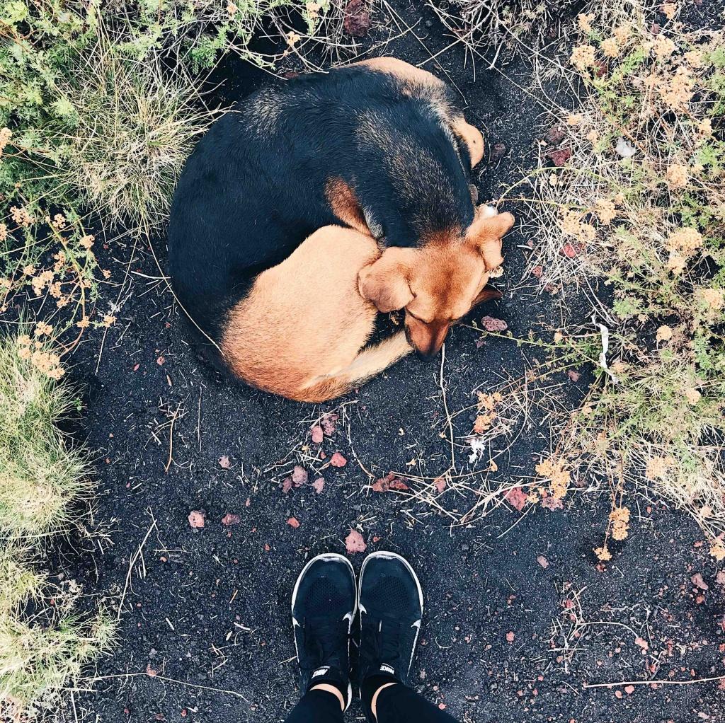 Escursione sull'Etna cane che dorme sul vulcano