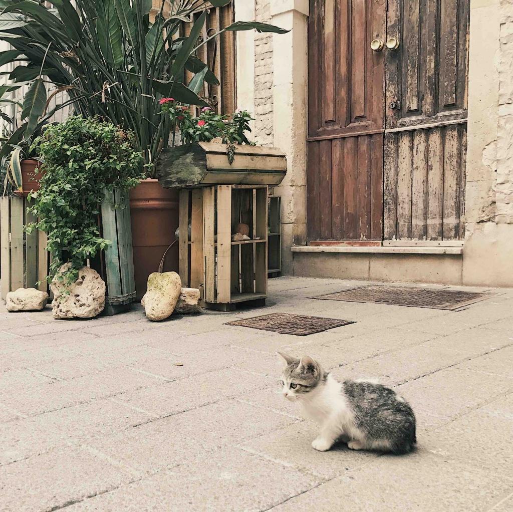 Un gatto a Ortigia l'isola nell'isola