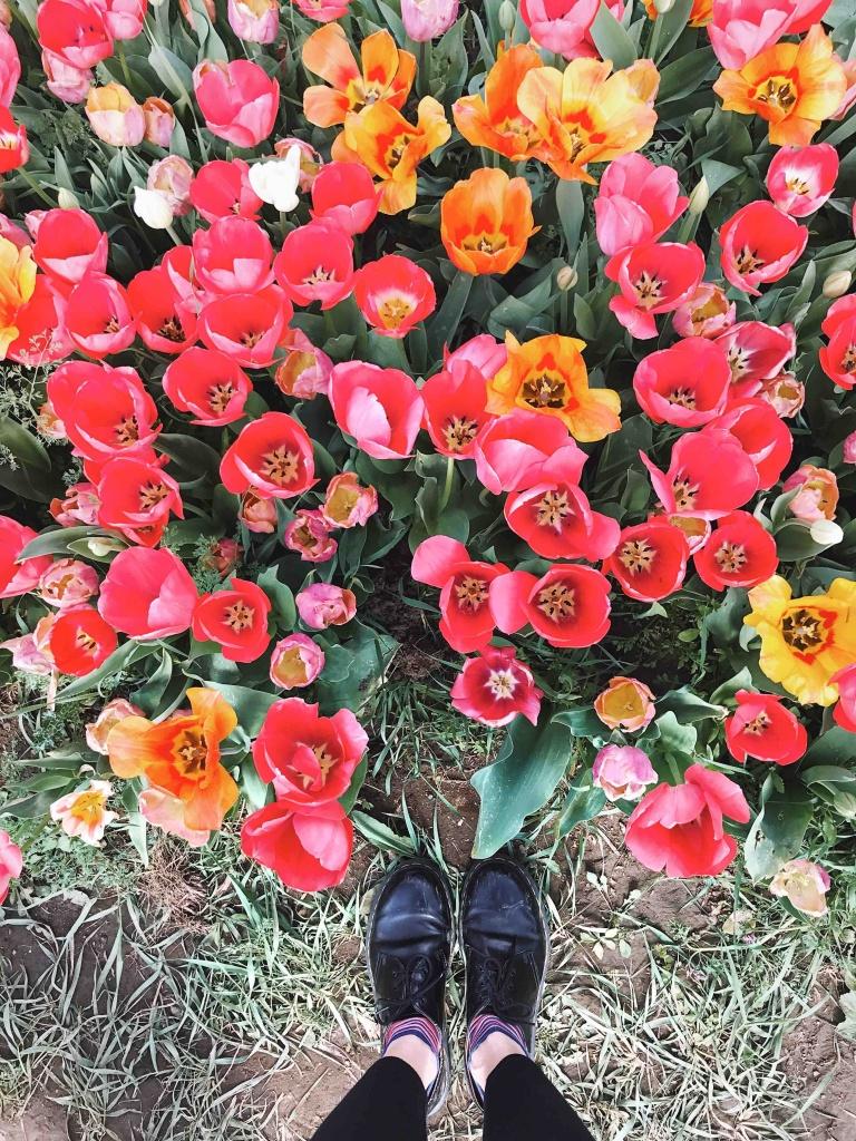 Tulipani a Roma: Tulipark