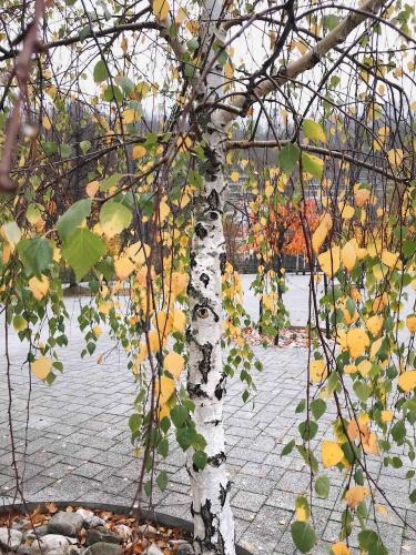 Le grotte di Postumia: in autunno i colori sono stupendi