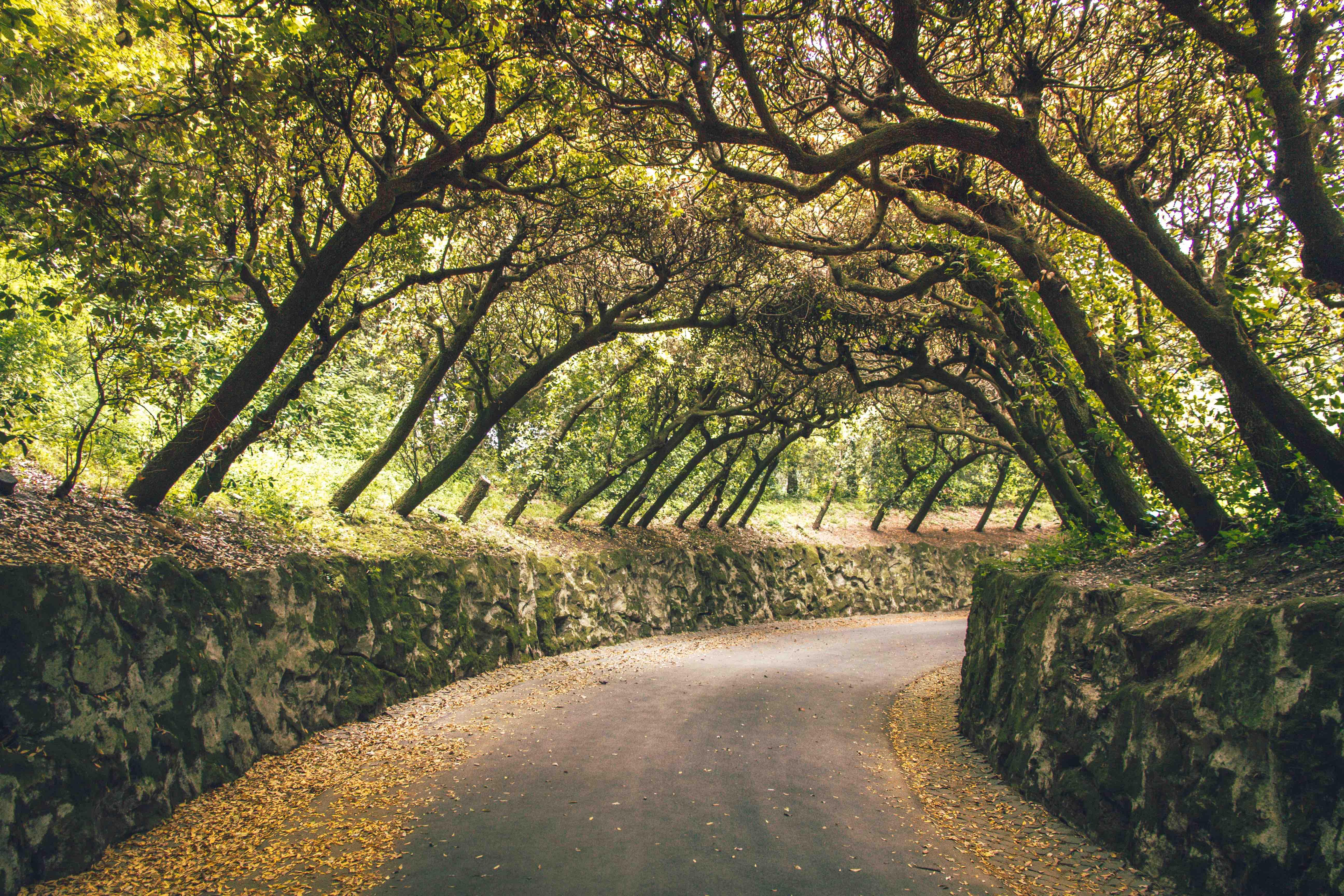 Cosa vedere ai Castelli Romani: tunnel di alberi ai Giardini delle Ville Pontificie