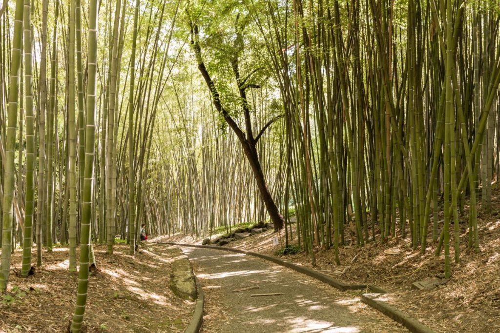 foresta di bambu nell'orto botanico a trastevere