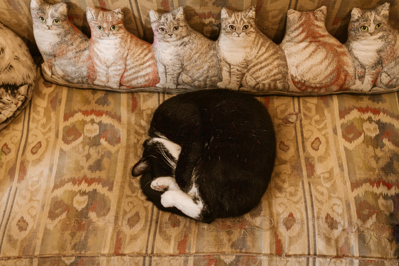 29 cose da vedere ad Amsterdam: il museo dei gatti gatto che dorme