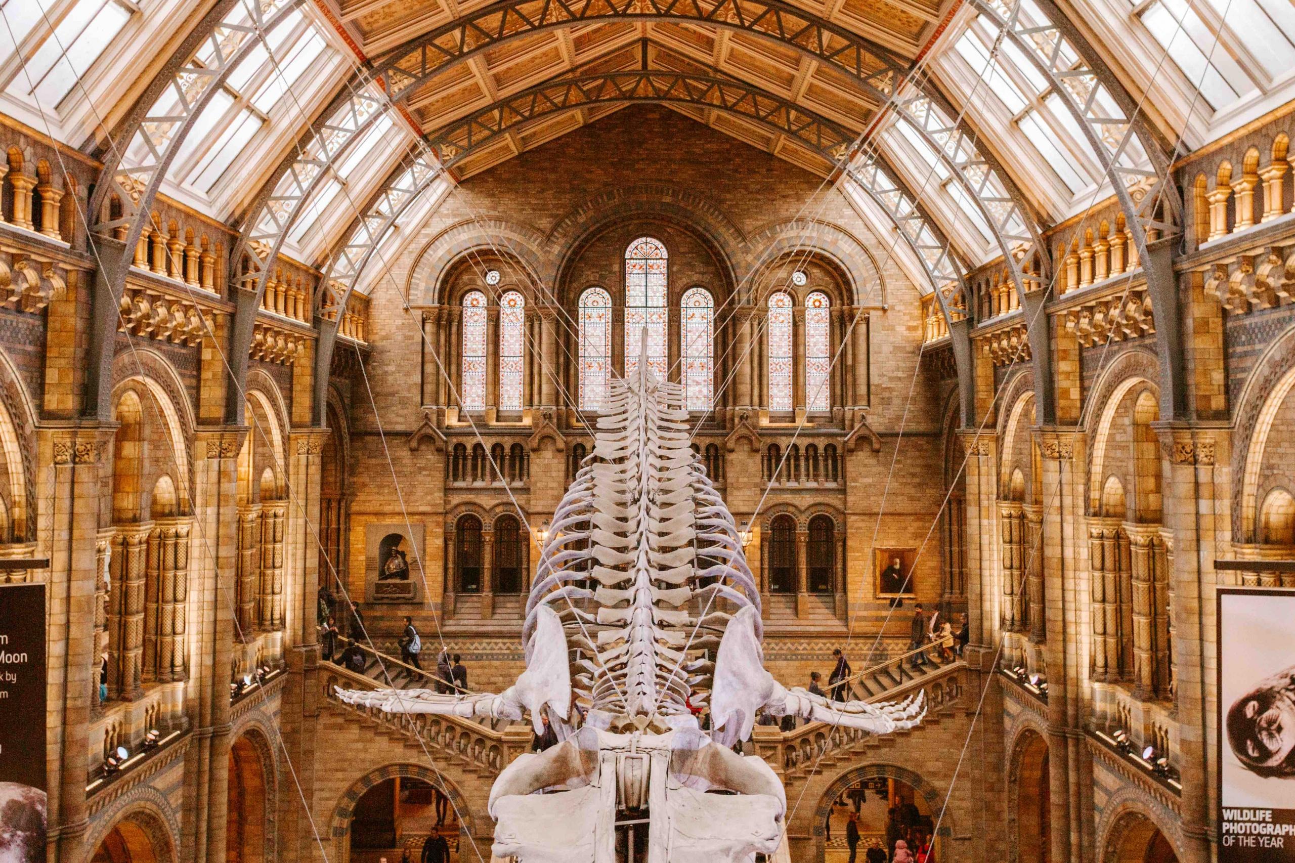 a Londra con i bambini: interno del museo di storia naturale
