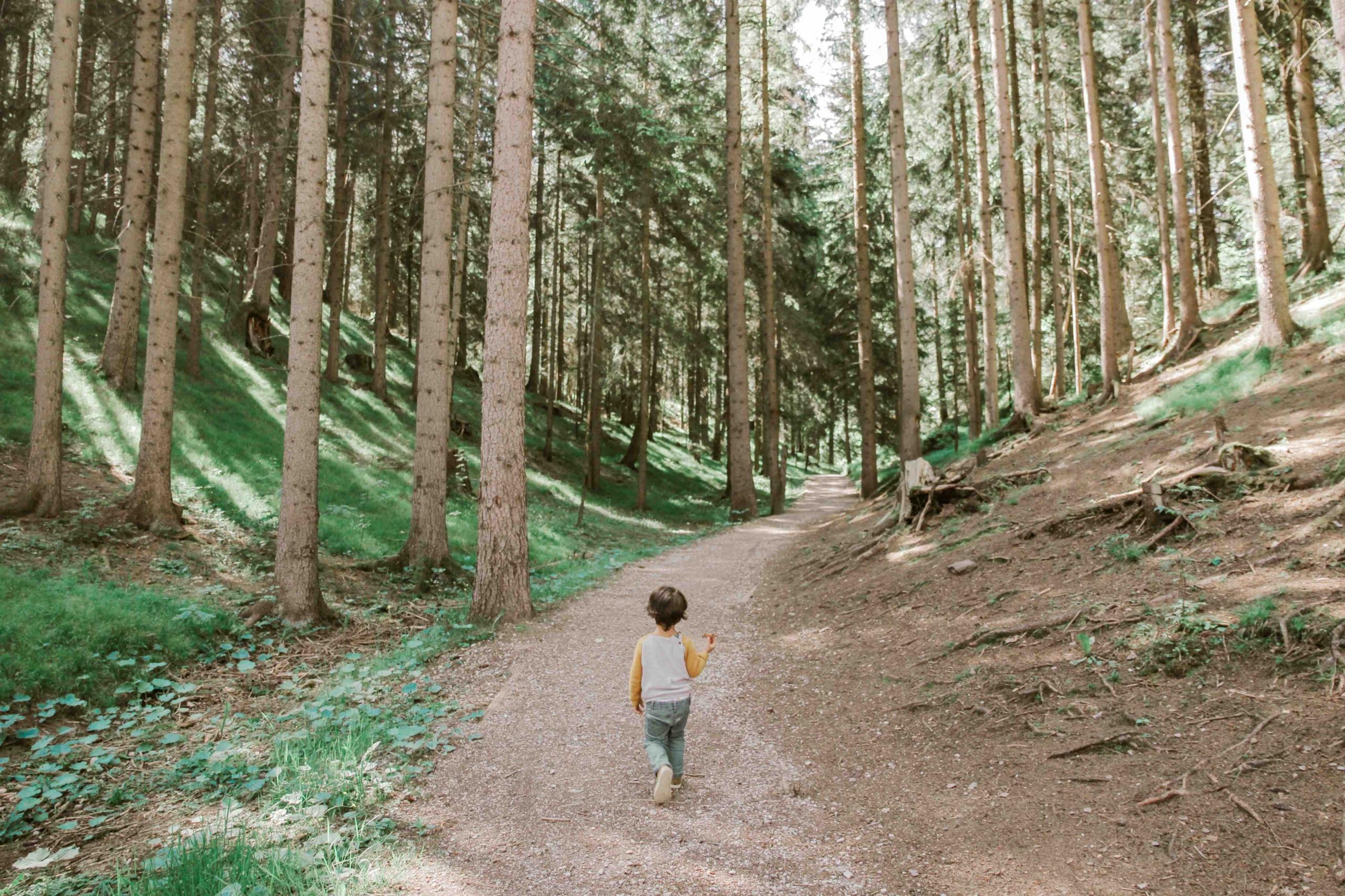 bambino cammina in un bosco, viaggiatori responsabili non inquinano