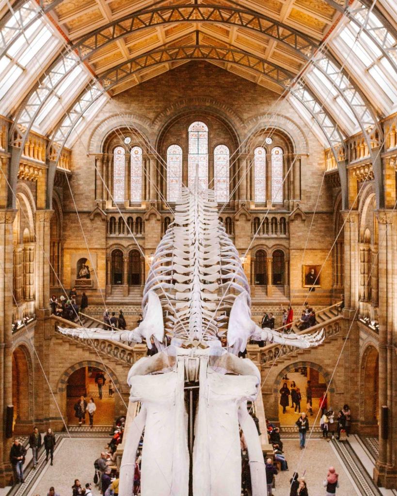 luoghi più belli da fotografare a Londra: interno del Museo di Storia Naturale con enorme scheletro di balena appeso