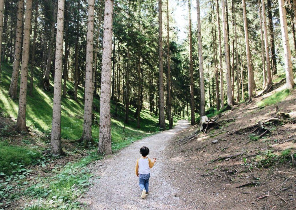 bambino cammina in un bosco in trentino alto adige
