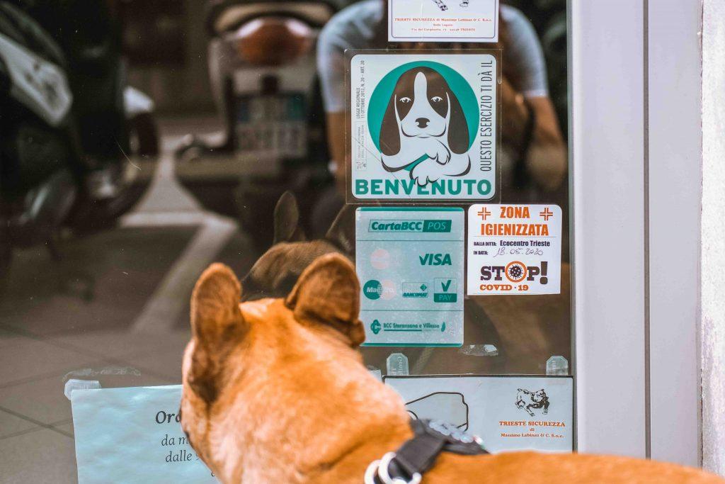 cane davanti a entrata di negozio