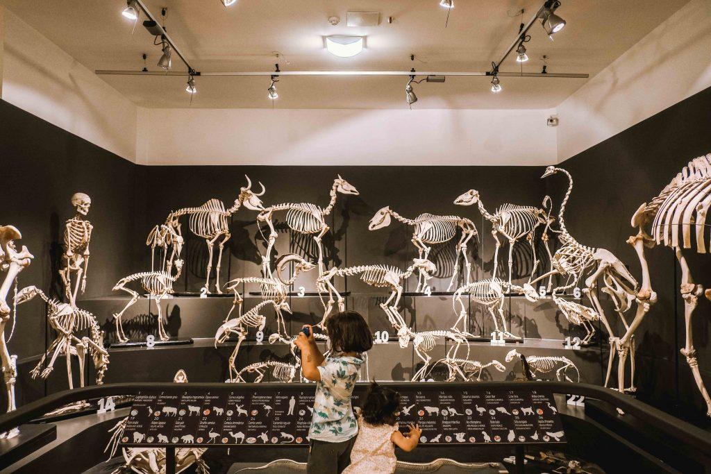 scheletri di animali nel museo di storia naturale di trieste
