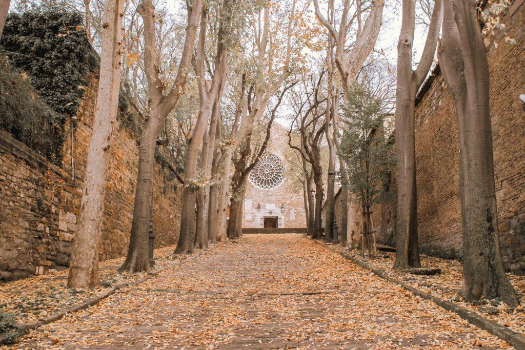 viale alberato in salita con chiesa sullo sfondo