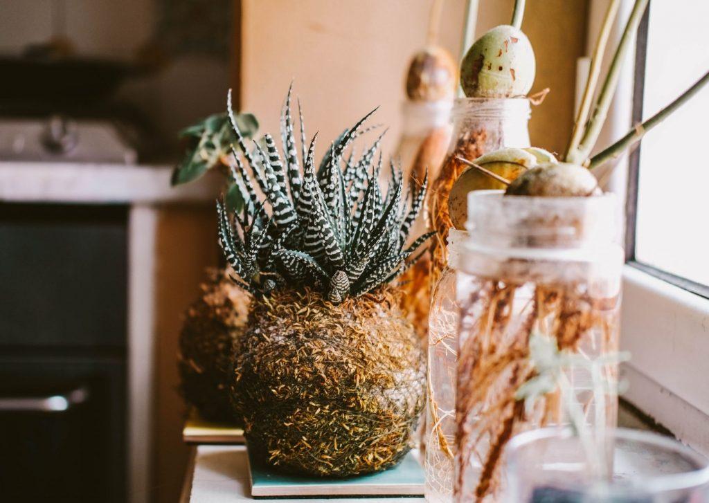 piante in palla di muschio idee regalo sostenibili