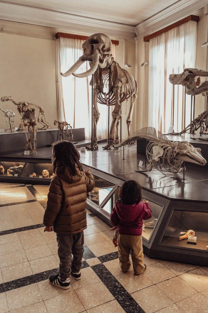bambini visitano museo di zoologia a roma